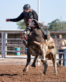 Artesia High School Rodeo Team member Michael Maulden, of Pinon, is thrown off the back of a bull during a rodeo demonstration held by the AHS Rodeo Team.