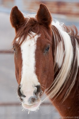 A horse with frost on its whiskers stands in a corral on East Castleberry Road.