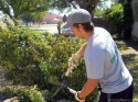 Brady Hardt trims a bush.
