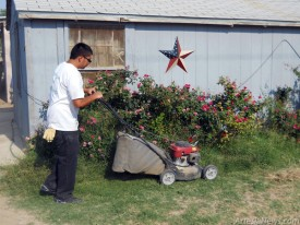 Salvador Alvarez uses a power mower to trim a lawn.