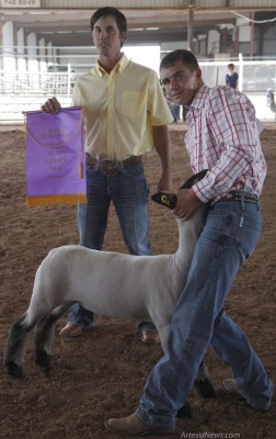 Weston Leonard of the Artesia FFA displays his Grand Champion Market Lamb Wednesday at the Eddy County Fair as judge Slayten Stribe of San Angelo, Texas, holds his banner.  Elizabeth Lewis – Daily Press
