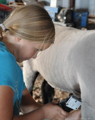 Jordyn Woodburn sheers her lamb in preparation for the annual Eddy County Fair. The Eddy County Fair runs July 22 thru July 28. The Junior Livestock Auction will be held July 28 at 9 am. Courtesy Photo