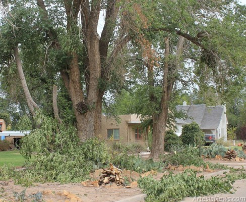 Fallen limbs are shown scattered throughout a row of front yards in Artesia as a result of Sunday's storm.