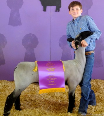 Kaylin Klein of Cottonwood 4-H displays his market lamb after taking Best of Eddy County in both the lamb and goat shows. Best of Eddy County consists of only livestock bred and raised in the county. Klein's lamb was raised by K&M and his goat by Klein Goats. Kyle Kaufman judged all three shows.  Liana Swarengin - Daily Press