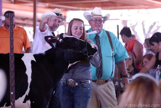 Eddy County Fair sale auction spotters Monte Avery, left, and Mike Hanagan encourage a bidder as a young participant steadies her heifer Saturday morning.  Brienne Green - Daily Press