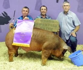 Jacob Colwell, left, of the Carlsbad FFA holds his Grand Champion banner after taking top honors late Tuesday evening in the Market Swine show at the Eddy County Fair. Joining him are brother Tyler Colwell, center, and judge Gavin McCune of Merritt, Okla.  Teresa Lemon - Daily Press