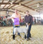 The best market lamb in Eddy County for 2015 was owned by David Scott and bred by K&M. (Teresa Lemon – Daily Press)