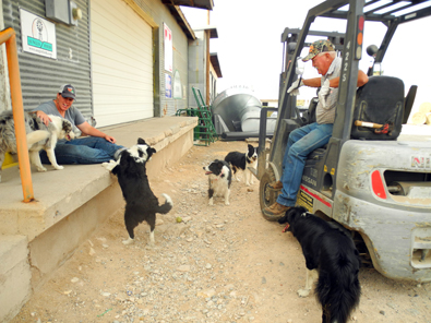 Owner Don Spearman, right, staff member Sara Langenegger, and the Double D Dog Pound. (Teresa Lemon - Daily Press)
