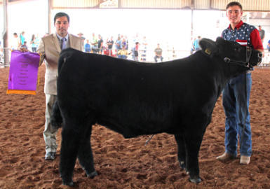 Judge Shane Meier of Stonewall, Texas, holds the Grand Champion ribbon for Cooper Hall of the Artesia FFA, right, after announcing Hall as the winner of Thursday's Market Steer Show. The steer competition closed out four days of youth livestock shows at the Eddy County Fair. (Elizabeth Lewis - Daily Press)