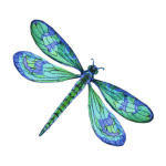 9-8-OUT-Dragonfly